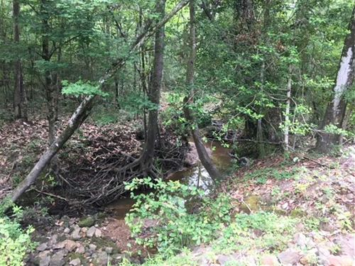 202 Acre Timber And Hunting Tract : Hemphill : Sabine County : Texas