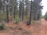 268 Acres Managed Timberland For : Chireno : Nacogdoches County : Texas
