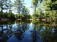 Hunting & Timber Property Magno : Magnolia : Pike County : Mississippi