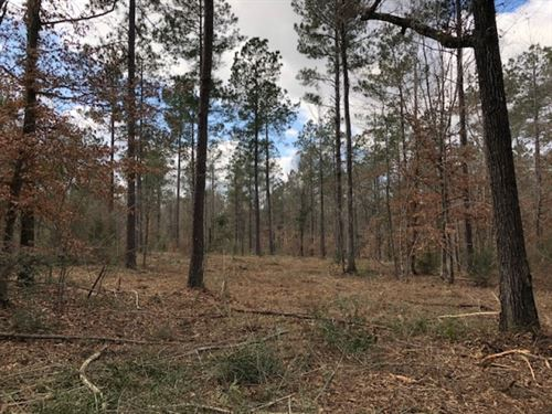 8 Acres In Npsd : Summit : Pike County : Mississippi