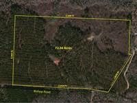 Incredible Timber/Hunting Property : Thomaston : Upson County : Georgia