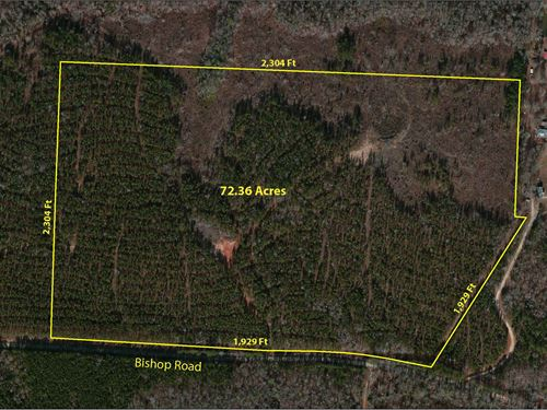 Incredible Timber/Hunting Property : Thomaston : Upson County : Georgia