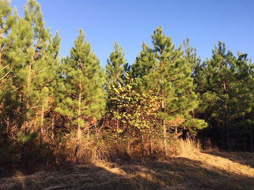 Walsh North Tract- Sealed Bid Sale : Hohenwald : Lewis County : Tennessee