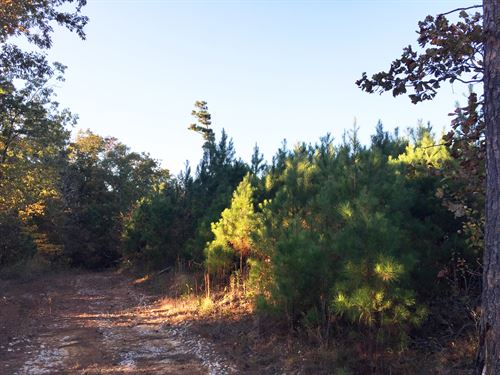 Walsh South Tract - Sealed Bid Sale : Hohenwald : Lewis County : Tennessee