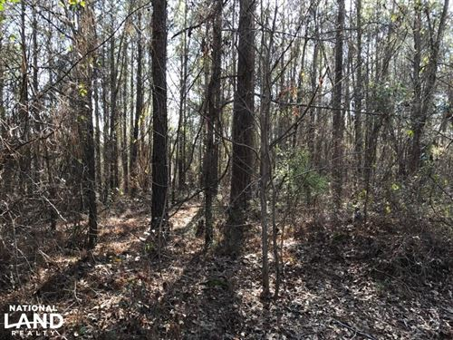 Sand Rd. Hunting 20 Acres : Fosters : Tuscaloosa County : Alabama