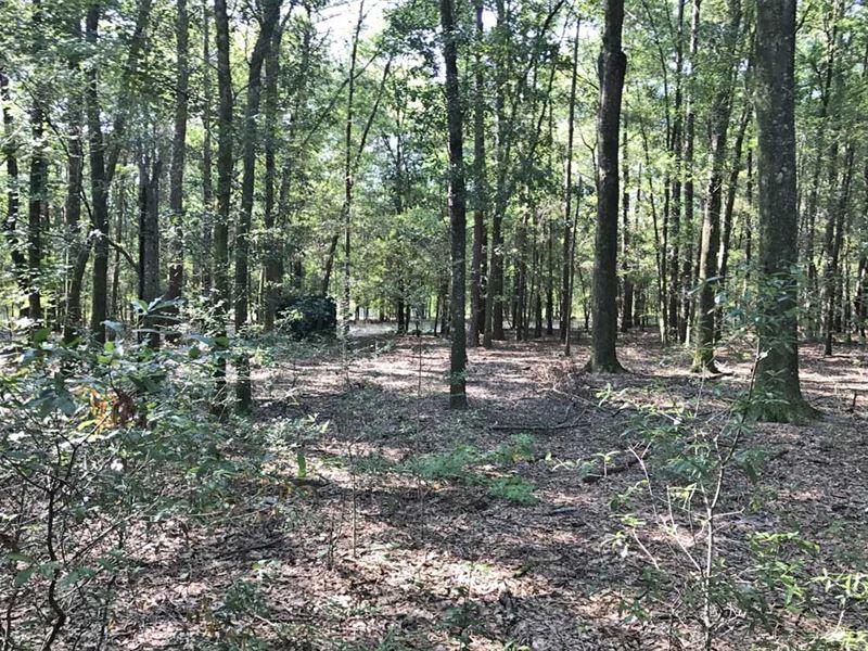 Hurricane Creek Tract : Ozark : Dale County : Alabama