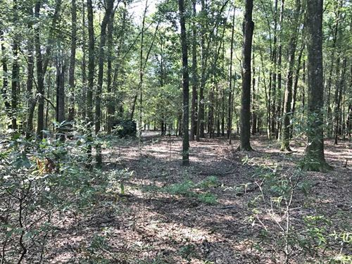 Hurricane Creek Tract : Ozark : Dale County : Alabama