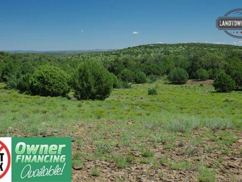 Amazing 40 Acre Treed Property Back : Seligman : Yavapai County : Arizona