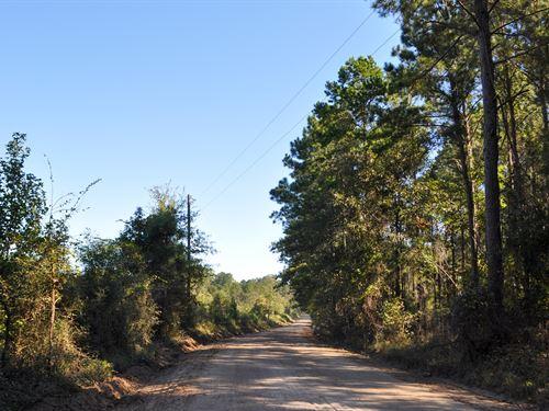 45 Ac Cr 211 Zavalla, Tx : Zavalla : Angelina County : Texas