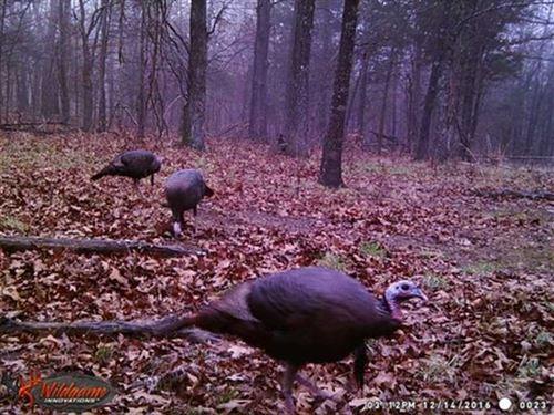Bald Eagle 132 : Green Forest : Carroll County : Arkansas