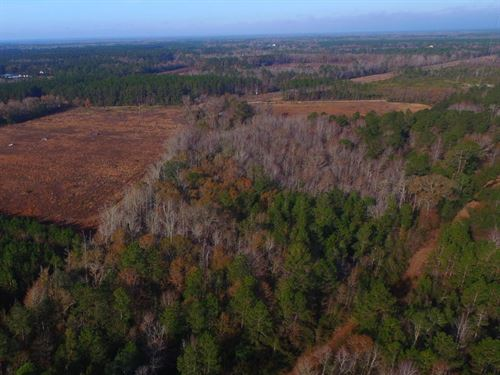 Natural Timberland Tract In Long Co : Ludowici : Long County : Georgia