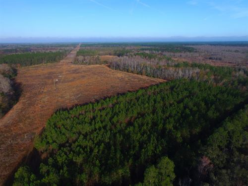 Timberland Tract In Long County : Ludowici : Long County : Georgia