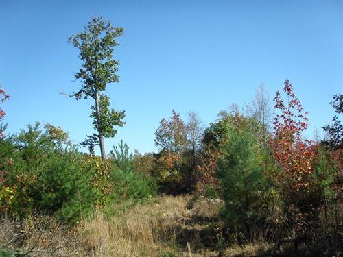 Off The Road : Farmville : Prince Edward County : Virginia