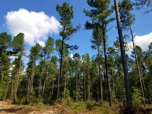Catwire 26 Tract : Neeses : Orangeburg County : South Carolina