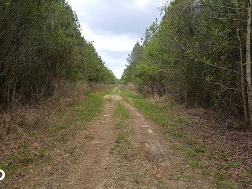 Pender County Hunting Land : Burgaw : Pender County : North Carolina