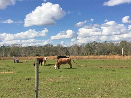 Beall Packing Road 11 Tract : Bonifay : Holmes County : Florida