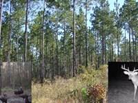 Lodge & Land : Chattahoochee : Gadsden County : Florida