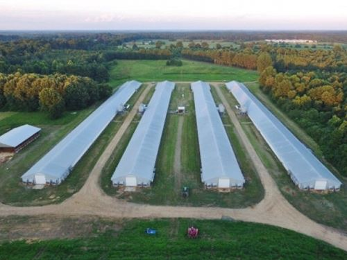 Poultry Broiler Farm 40 Acres Sw MS : Bogue Chitto : Lincoln County : Mississippi