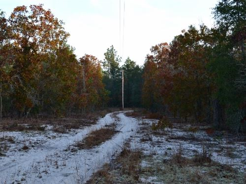 99 Acres Hwy 56 : Swainsboro : Emanuel County : Georgia