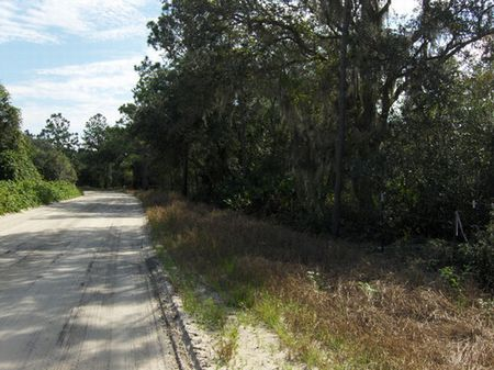 10 Wooded Acres (a-222) : Hawthorne : Putnam County : Florida