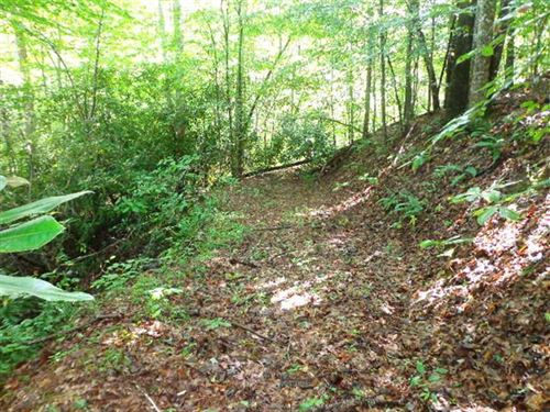 50 Acres of Peace Near The Nationa : Marion : McDowell County : North Carolina