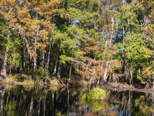 Pond Hunting Timber Investment : Monticello : Jefferson County : Florida