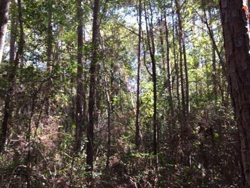 McIntosh Timber And Recreation Trac : McIntosh : Washington County : Alabama