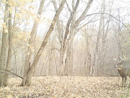 13+ Acres With Cabin, Waterfall, : Livingston : Grant County : Wisconsin