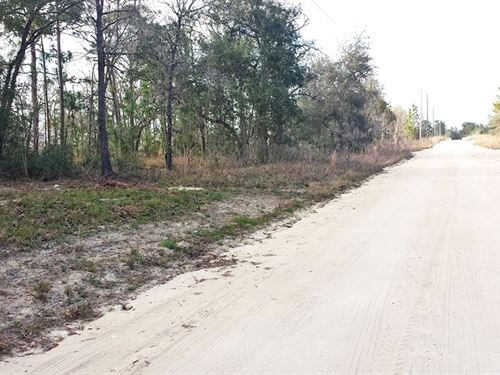 Residential Lot Close To Lake Weir : Belleview : Marion County : Florida