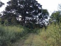 Davis Estate, Grant Parish, 1,000 : Colfax : Grant Parish : Louisiana