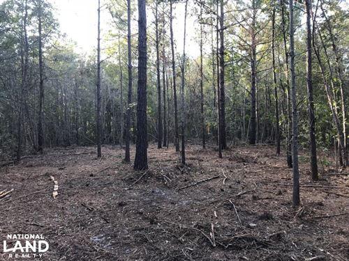 Bonneau Ridge 18 Acres : Bonneau : Berkeley County : South Carolina