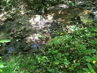 10 Acres In The Mountains : Jasper : Pickens County : Georgia