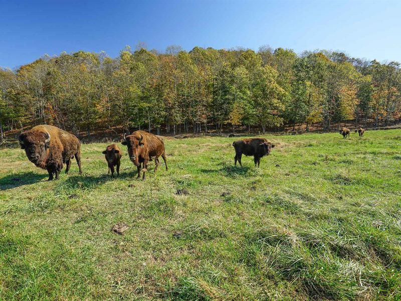 Sr 327 - 299 Acres - Jackson County : Ray : Jackson County : Ohio