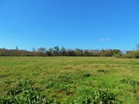 Cattle Farm With Home : Carnesville : Franklin County : Georgia