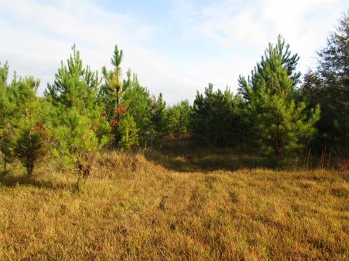 40 Acres In Forrest County, Ms : Petal : Forrest County : Mississippi