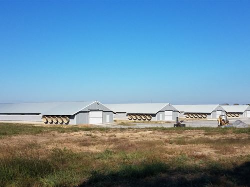 Four House Breeder Farm : Gainesville : Sumter County : Alabama