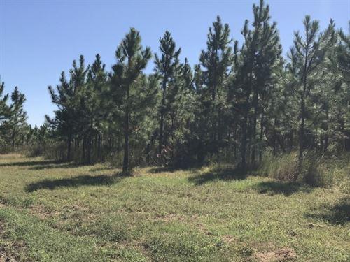 Planted Slash Pine Timber Investmen : Abbeville : Wilcox County : Georgia