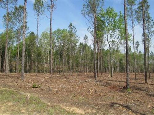 Carolina Acreage With Financing : Chesterfield : South Carolina