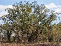 State Park Frontage Hunting Timber : Monticello : Jefferson County : Florida