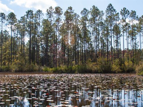 Nature Preserve Hunting Pond Timber : Monticello : Jefferson County : Florida