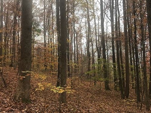 15+/- Acres Wooded Hunting Tract : Jasper : Marion County : Tennessee