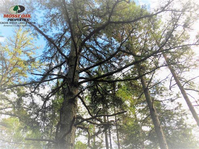 Fully Timbered Small Hunting Tract : Evening Shade : Sharp County : Arkansas