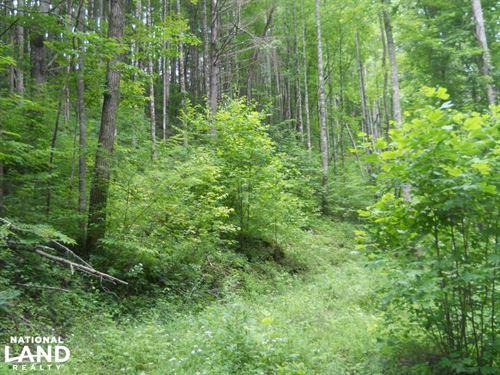Hardwood Timber And Hunting Tract : Topton : Macon County : North Carolina