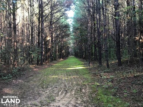 Akron Timber Investment & Hunting : Akron : Hale County : Alabama