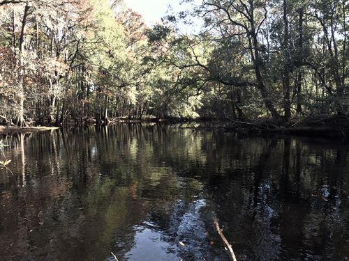 South Carolina Riverfront Acreage : Dillon : South Carolina