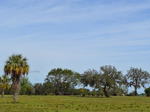 Highway 17 Ranch : Arcadia : De Soto County : Florida
