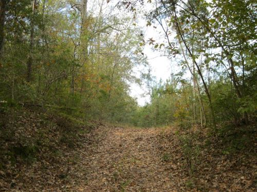 144 Acres On Trask Road : Centreville : Amite County : Mississippi