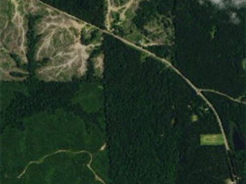80 Acres Oxford/Meadville Road : Gloster : Amite County : Mississippi