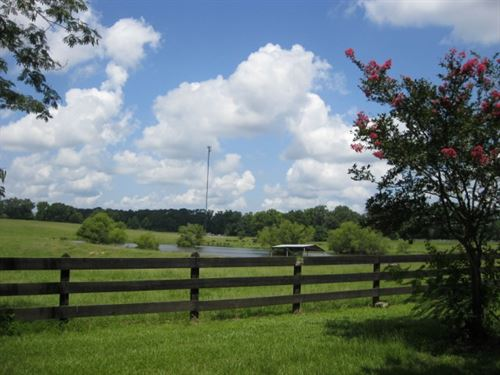 82 Acres On Hwy 24 : Centreville : Wilkinson County : Mississippi