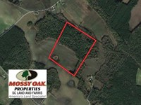32.5 Acres of Farm And Timber Land : Lynchburg : Sumter County : South Carolina